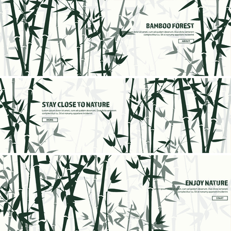 Set foresta di bambù. Natura. Giappone., Cina. Pianta. Albero verde con foglie. Foresta pluviale in Asia. Archivio Fotografico - 73591029