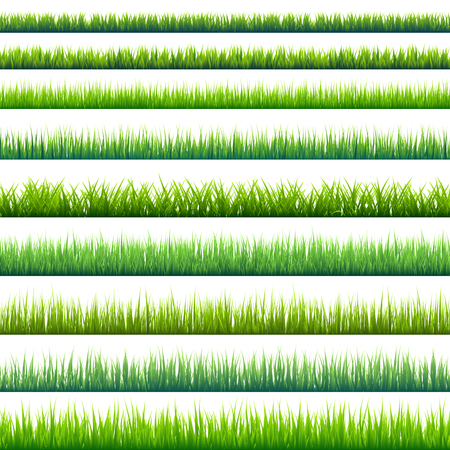 weeds: Grass isolated on white set.