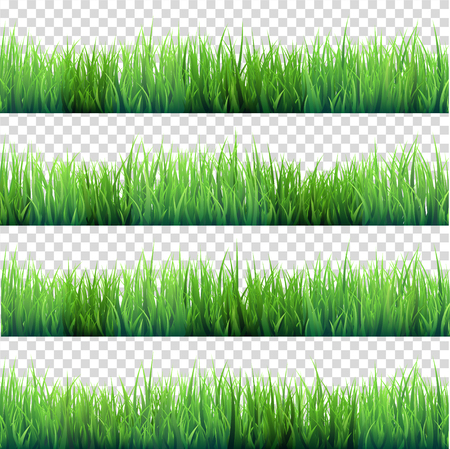 Grass isolated on transparent background set. Green meadow. Nature background. Spring, summer time. Çizim