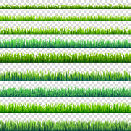 Grass isolated on transparent background set. Green meadow. Nature background. Spring, summer time. Illustration