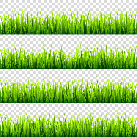 Grass isolated on transparent background set. Green meadow. Nature background. Spring, summer time. Stock Vector - 83206622