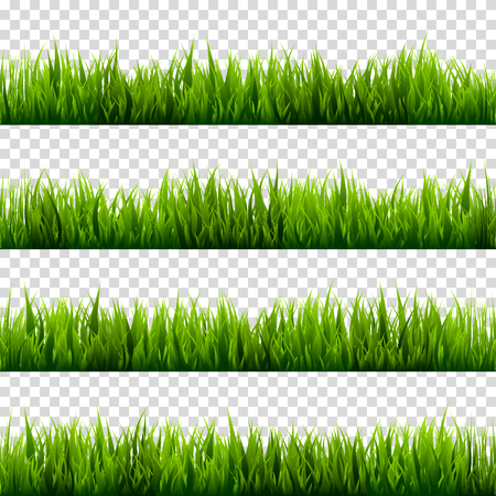 Grass isolated on transparent background set. Green meadow. Nature background. Spring, summer time. Stock Photo