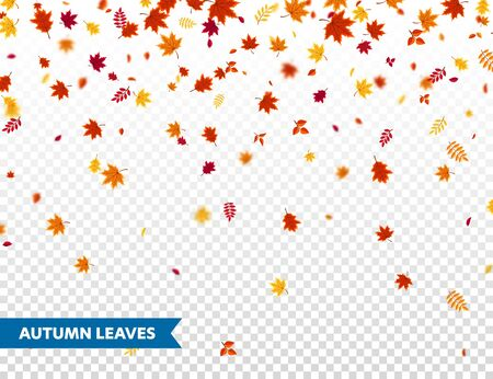 Autumn falling leaves. Nature  with red, orange, yellow foliage