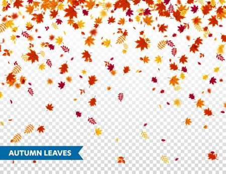 Autumn falling leaves. Nature  with red, orange, yellow foliage.