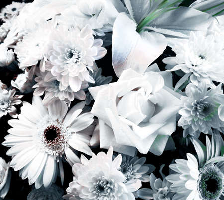 Close-up on rose, daisy and dahlia