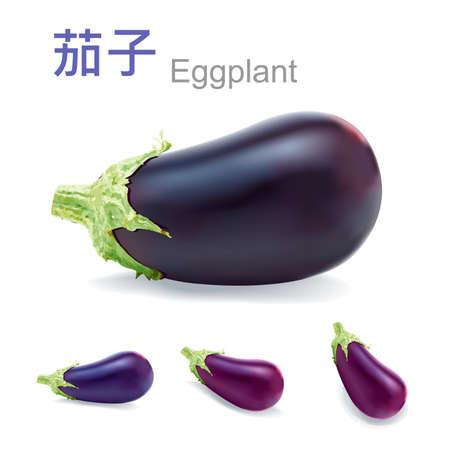 fresh eggplant vector Vector
