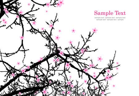 natural vector: cherry blossom.vector