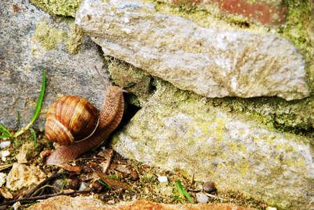 dike: The snail climbs up the dike