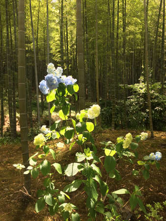 Flower in the middle of Bamboo forest