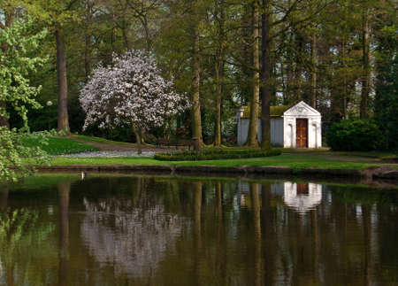 magnolia soulangeana: Reflection of blooming magnolia soulangeana and little house in the belgian park in springtime