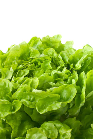 Close up of fresh butterhead lettuce (copy space) Stock Photo