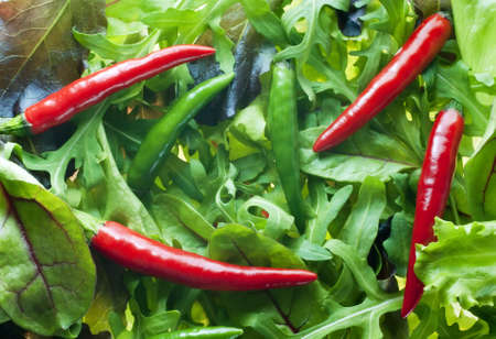 Mixed salad greens with red and green chillies on top. Vegetarian background