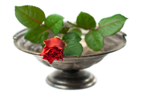 Antique silver bowl with red rose isolated on white (shallow depth of field) Stock Photo