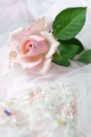 One pink rose on wedding lace (shallow depth of field, copy space)