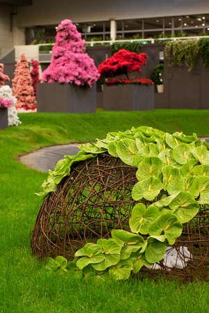 GHENT, BELGIUM - APRIL 23: The Ghent Floralies (de Gentse Floralien ) 34th edition of prestigious flower and plant exhibitions on April 17-25, 2010 in Ghent (Gent), Belgium. Green anthurium. Stock Photo - 6897627