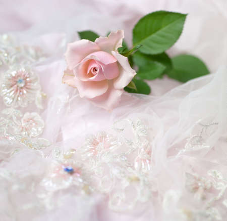 One pink rose on wedding lace (shallow depth of field, copy space) photo