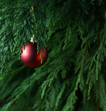 Purple christmas ball on green background (shallow depth of field,copy space). Xmas background