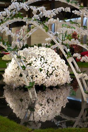 GHENT, BELGIUM - APRIL 23: The Ghent Floralies (de Gentse Floralien ) 34th edition of prestigious flower and plant exhibitions on April 17-25, 2010 in Ghent (Gent), Belgium. White orchids.
