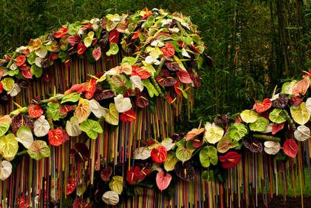 GHENT, BELGIUM - APRIL 23: The Ghent Floralies (de Gentse Floralien ) 34th edition of prestigious flower and plant exhibitions on April 17-25, 2010 in Ghent (Gent), Belgium. Anthurium. Editorial