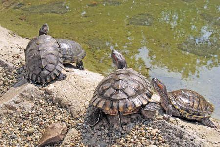 tortoises photo