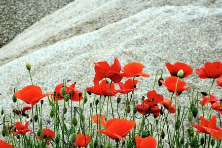 Flowers Stock Photo - 7055555