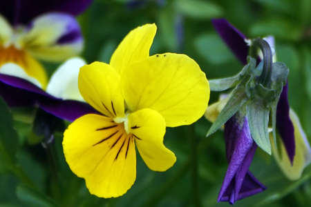 Floral texture.Picture taken in Timisoara, Romania Stock Photo - 13150750