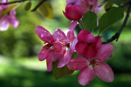 Floral texture.Picture taken in Timisoara, Romania photo