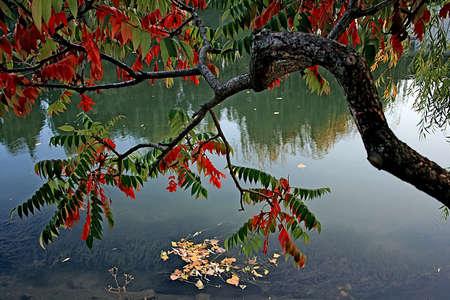 Timisoara, Romania  October 2007  River Bega and   autumn  photo