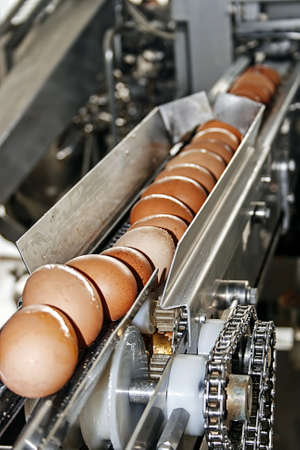 industry inside: Eggs placed on the transmission line by machines with automatic breaking and training to mix