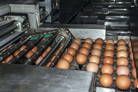 Transportation and industrial plant selection for egg Stock Photo