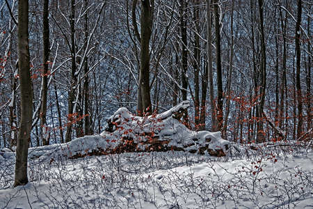 Winter in the woods  The location is in Romania, district Caras-Severin, in the Jgheabu forest, near the town of Otelu Rosu  At certain times of the day, the atmosphere becomes blue