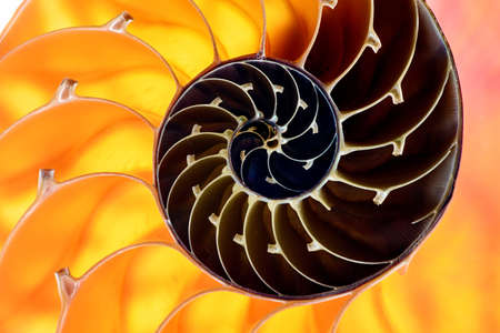 Nautilus shell section with yellow and brown spiral on background  photo