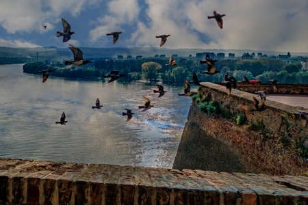bevy: Bevy of birds and young resting on the walls of Petrovaradin fortress in Novi Sad, Serbia. Image digitally manipulated. Stock Photo