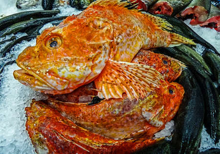 Various marine fish exposed for sale on ice. photo