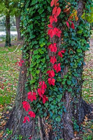 an atmosphere: �rbol con follaje decorativo en atm�sfera oto�o.