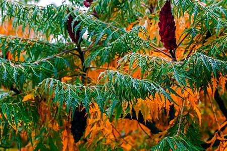 atmosfera: Las plantas con follaje decorativo en atm�sfera oto�o.
