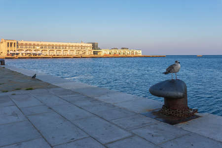 Pigeon on waterfront and building Molo Audance - Bersaglieri in background. Trieste, Italy
