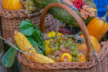 Autumn arrangement with pumpkins, corn and grapes in basket. Фото со стока
