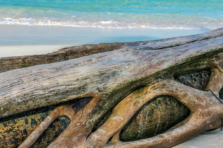 Background with an old palm trunk on a wild beach in Punta Cana, Dominican Republic.