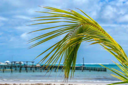 Close-up with a palm leaf and a tourist dock at the ocean on a fine sandy beach in Punta Cana, Dominican Republic.