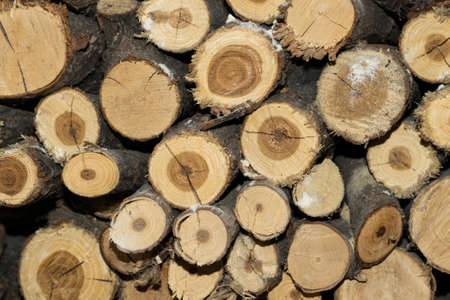 lumbering: Stack of firewood background texture