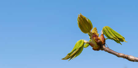 detail close-up macro spring bud with clear sky background