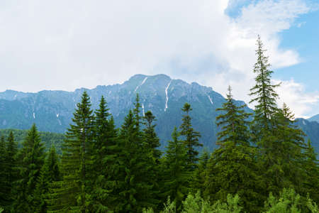 green fir trees with snow covered mountain peaks in the background