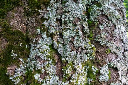 selective focus close-up of a tree-dwelling lichen Reklamní fotografie