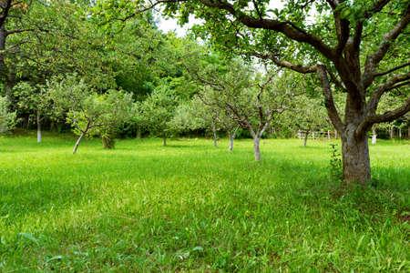 green orchard Reklamní fotografie