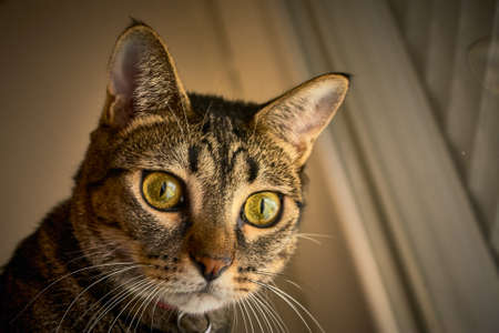 A lovely striped cat lying