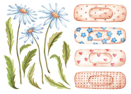 Set of watercolor flowers, medical plaster for design. Cute watercolor illustration, blooming daisies, leaves, buds, stickers.