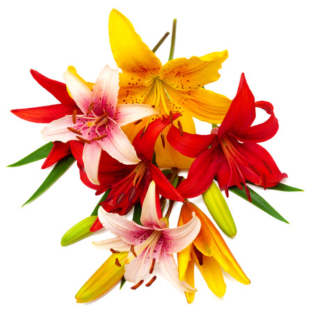 bouquet: Bouquet of beautiful flowers lilies. The holiday greeting card colors.