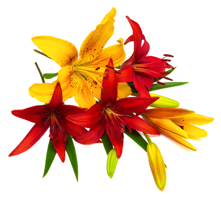 holiday greeting: Bouquet of beautiful flowers lilies. The holiday greeting card colors.