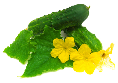 cuke: Cucumber with leaves and flowers isolated on white background Stock Photo